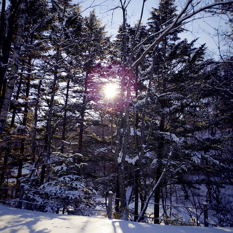 森の雪.jpg