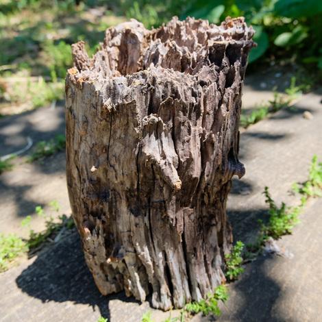 a stump.jpg